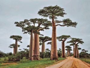 meditazione africana african meditation