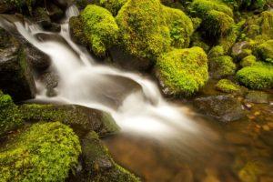 flow of life meditation meditazione del flusso della vita